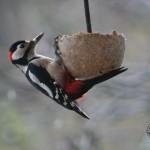 Bird Cake Woodpecker David Ramsden