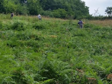 Bracken Bashing Volunteers LLP Wildlife Diary July 2017