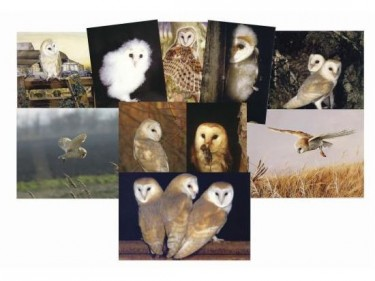 Owl greeting cards Bumper Pack 30 Blank A6 Cards