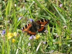 Butterflies Of Rough Grassland 01