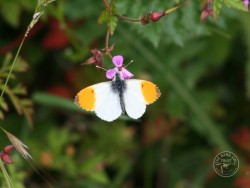 Butterflies Of Rough Grassland 11