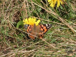 Butterflies Of Rough Grassland 18