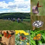 Butterfly Walk Collage