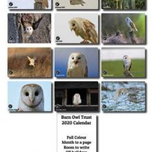 Owl Toys Gift Ideas Direct From The Barn Owl Trust