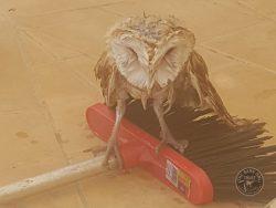 Wet Owl August 17