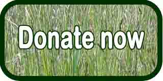 Donate Now Button 2