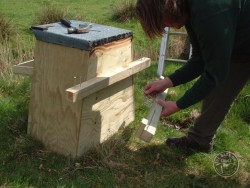 Erecting A Barn Owl Treebox 04