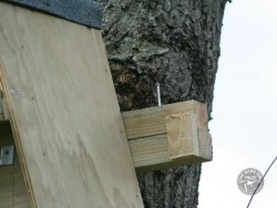Erecting A Barn Owl Treebox 08