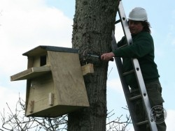 Erecting A Barn Owl Treebox 09