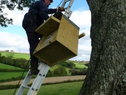 Erecting A Barn Owl Treebox 12