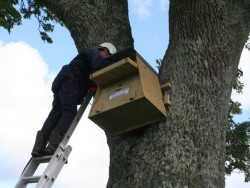 Erecting A Barn Owl Treebox 13