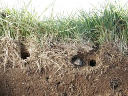 Field Vole Holes Litter Layer
