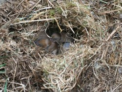 Field Vole Nest LLP