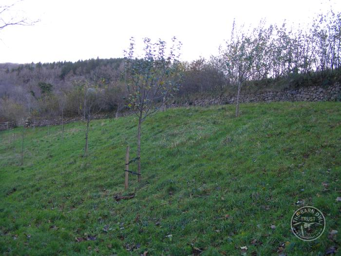 Forde Orchard Apple Trees With Leaves Wildlife Diary December 2015