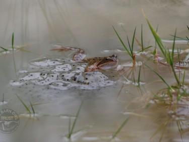 Frog wallpaper photo
