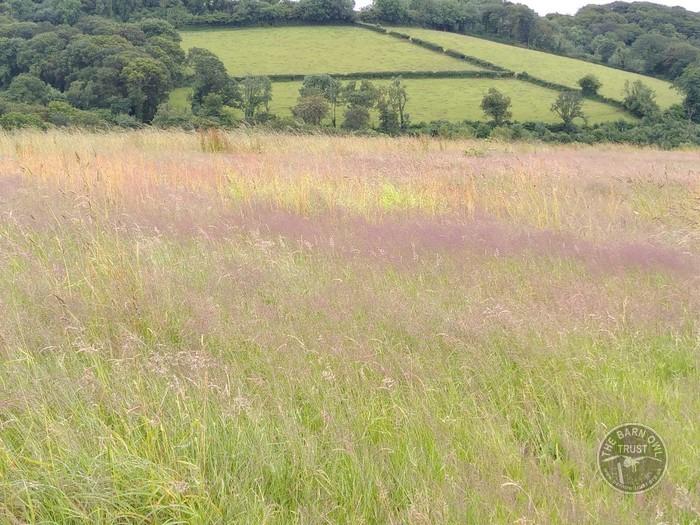 Grasses july 2021