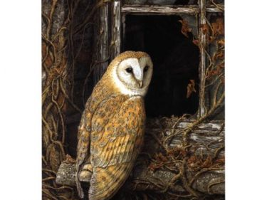Barn Owl print: 'Facing Eviction' from a painting by Dick Twinney
