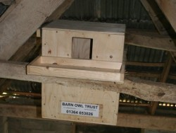 Indoor Barn Owl Nestbox Erection 02