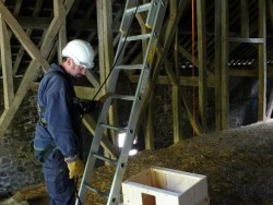 Indoor Barn Owl Nestbox Erection 04