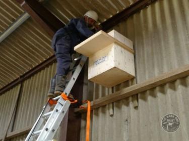 Indoor Barn Owl Nestbox Erection