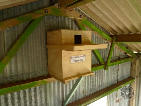 Indoor Barn Owl Nestbox Erection 17