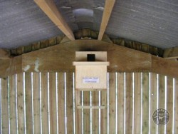 Indoor Barn Owl Nestbox Erection 27