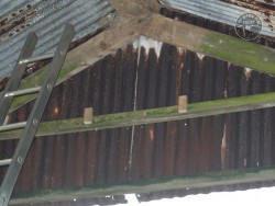 Indoor Barn Owl Nestbox Erection 29