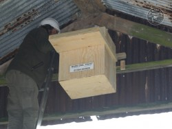 Indoor Barn Owl Nestbox Erection 30