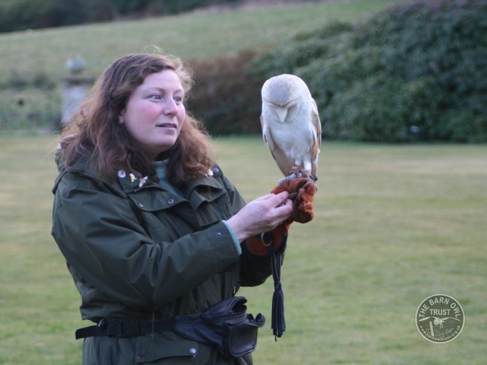 Thinking Of Keeping A Captive Barn Owl The Barn Owl Trust
