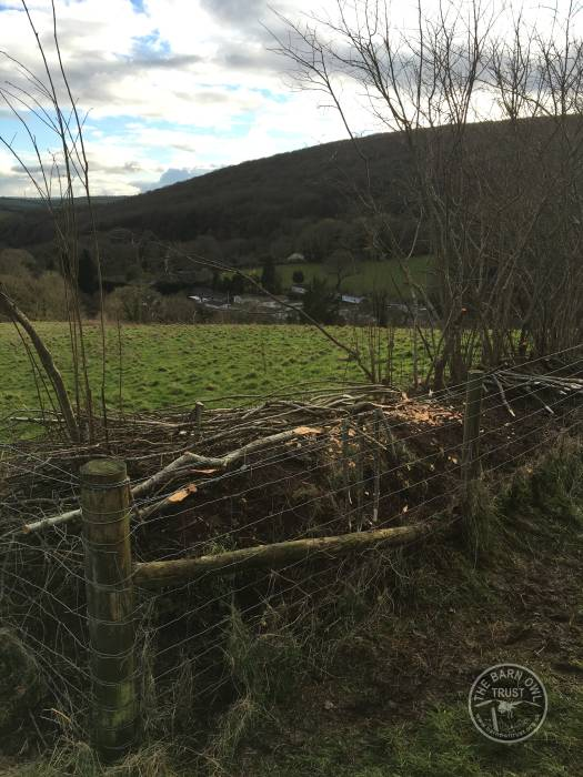 Kiln Close Hedge Laying LLP Wildlife Diary February 2016