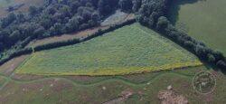 LLP aerial bird food crop [david ramsden] 230721