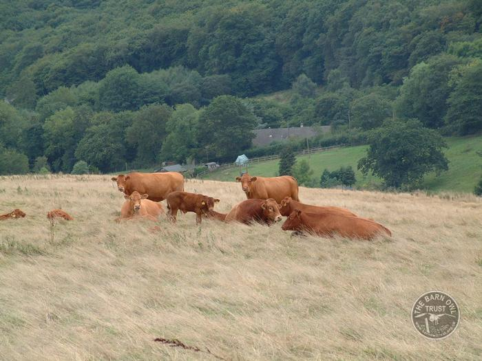 LLP Cattle Livestock Grazing