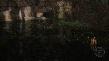 Llp frogs spawn [david ramsden] 270121 (a) 2
