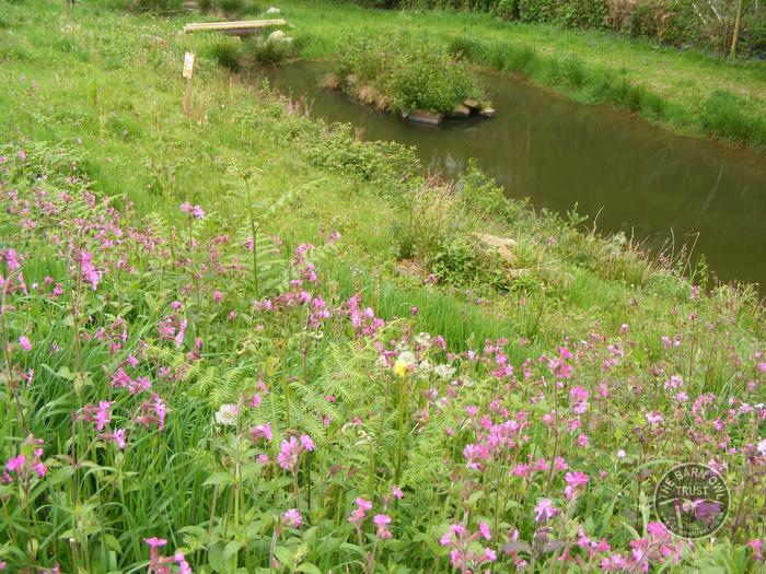 Red Campion and the Flo Pond