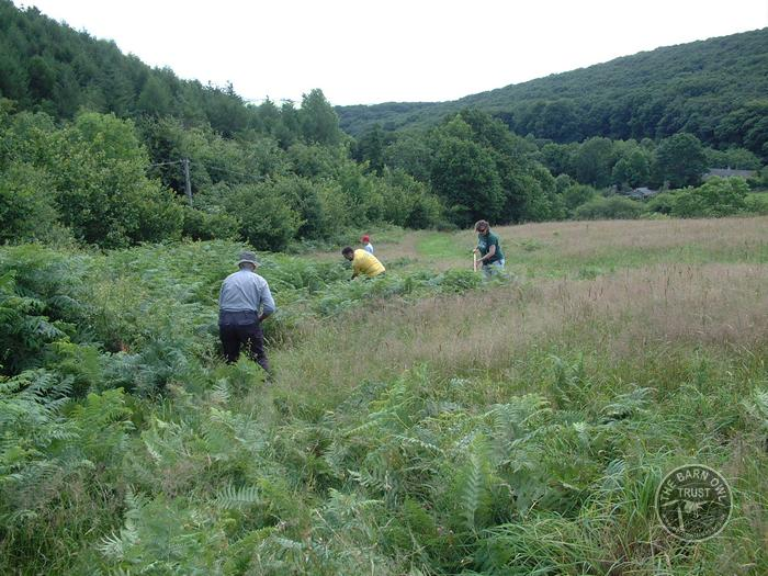 LLP staff and volunteers bracken bashing