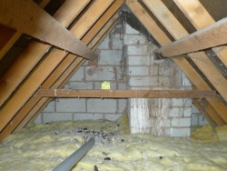 Nest Roost Sites Barn Owl In House Loft