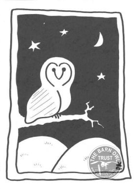 Night Owl Black White Card