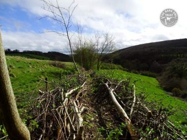 North Park Hedge Laying Double Comb LLP Wildlife Diary March 2017