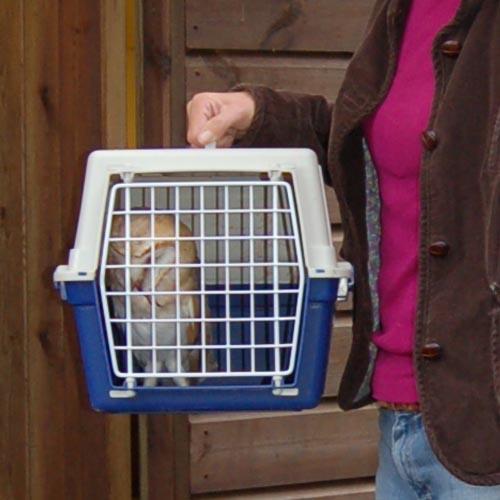 Owl Aid Vet Visit