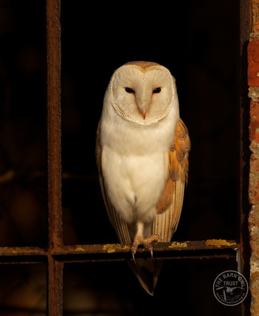 Purdue Owl Apa Research Paper