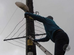 Person Up Electricity Pole