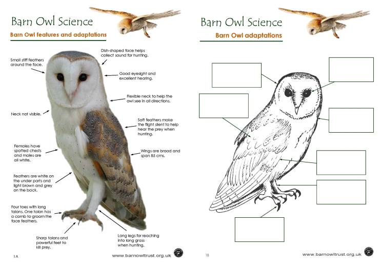 Barn Owl conservation Science educational resources The Barn – Adaptation Worksheet