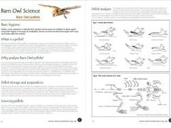 Science Barn Owl Pellets
