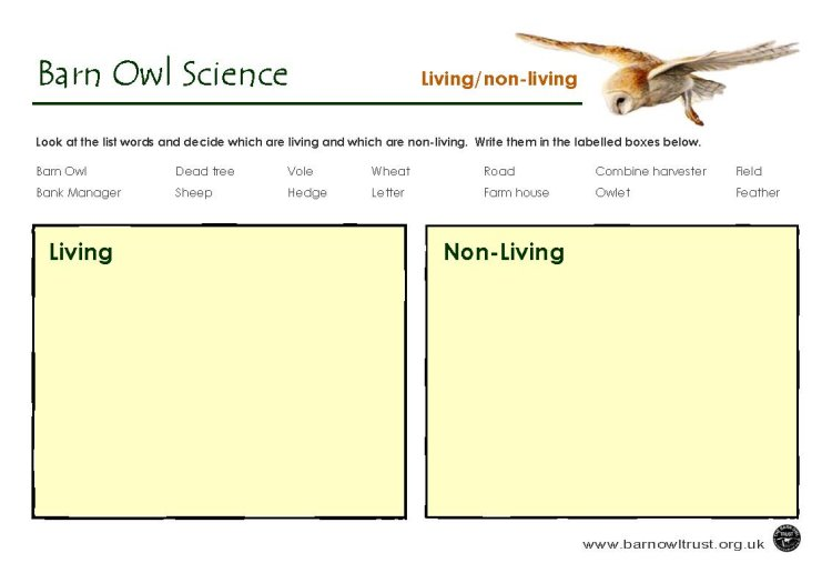 Barn Owl Conservation Science Educational Resources The