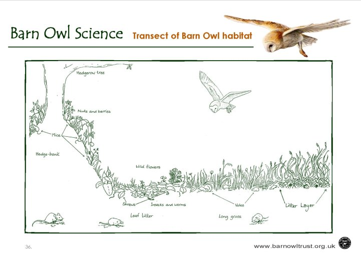 Barn Owl conservation Science educational resources The Barn – Habitat Worksheets