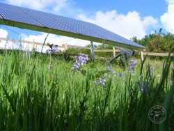 Solar panels and Bluebells