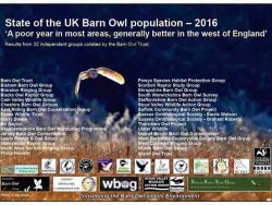 2016 Barn Owl numbers