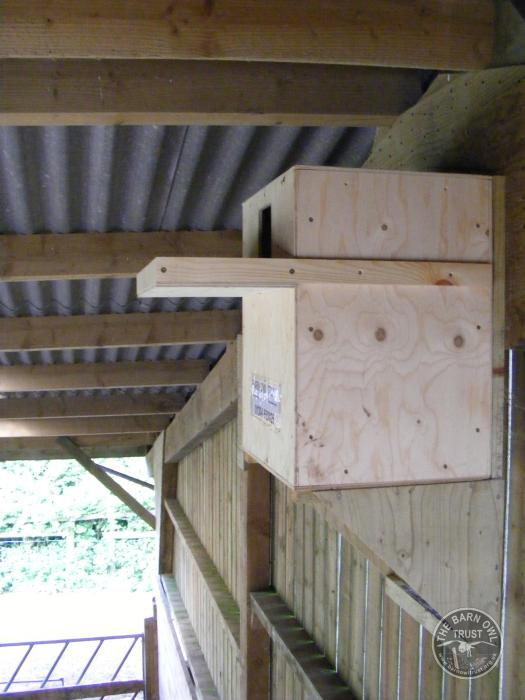 Suitable positions for Barn Owl indoor nestboxes - The ...