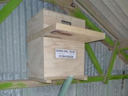 Suitable Positions Barn Owl Indoor Nestboxes 04