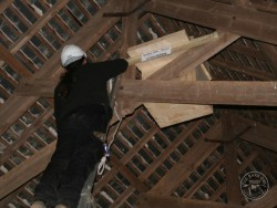 Suitable Positions Barn Owl Indoor Nestboxes 08